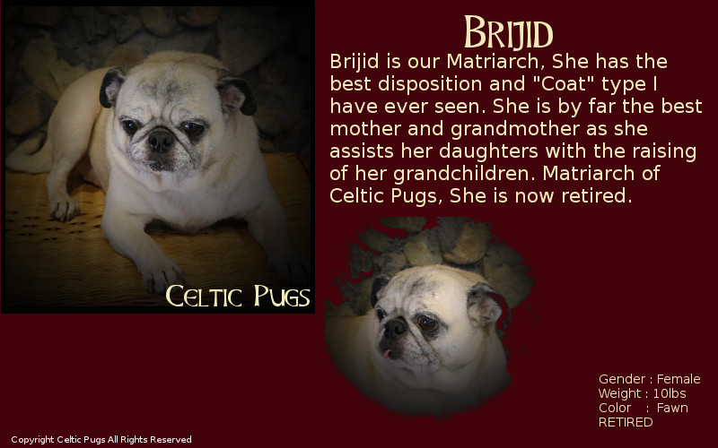 Our Pug Lads and Lassies, Celtic Pugs Johnstown PA